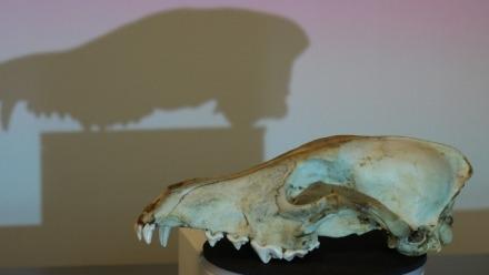 Skullbook - Digital Bone Library