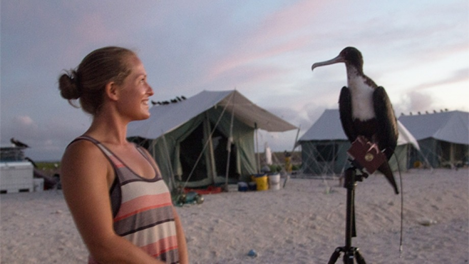 April Surgent and a frigate bird. Image supplied by April Surgent;photo taken under NMFS permit # 16632-01 and PMNM-2016-011-F.